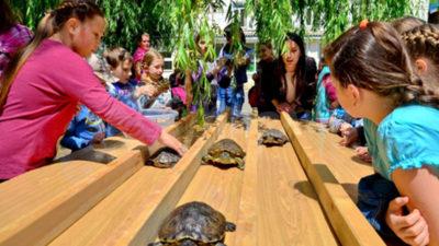 Шоу черепах