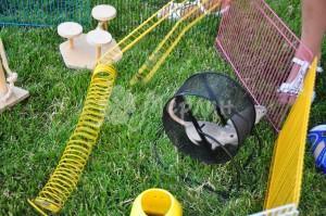 interaktivnyiy-zoopark-11